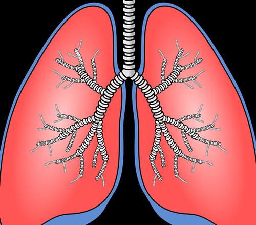 zenzero e bronchite